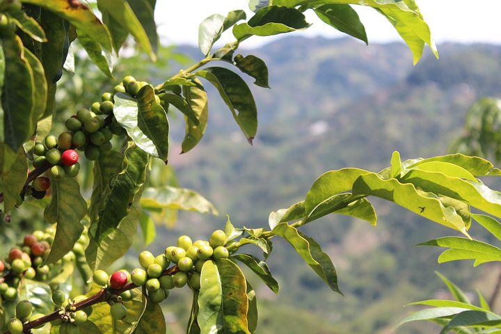 Petani Kopi Lereng Wilis Keluhkan Berbagai Masalah Produksi, Hingga Butuh Pendampingan