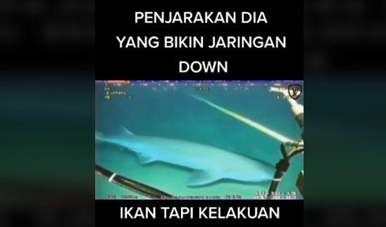 Viral, Video Kabel Telkomsel dan Indihome Digigit Hiu di Dasar Laut. Bagaimana Kebenarannya?