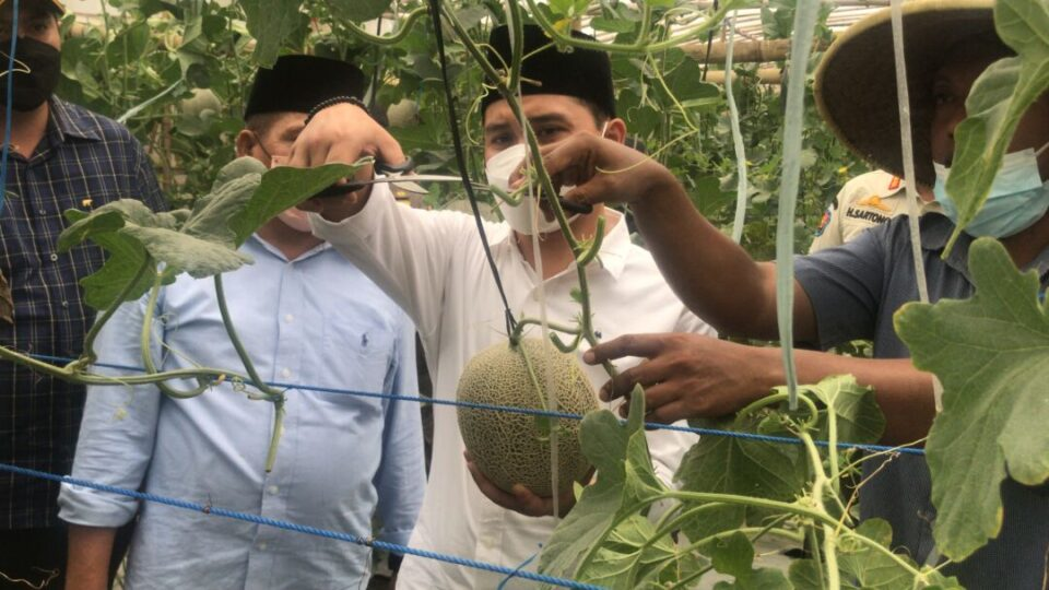 Dikunjungi Wabup, Petani Melon Minta Pengembangan Wisata Berbasis Pertanian