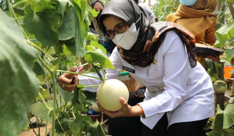 Panen Raya Binangun, Pemkab Blitar Apresiasi Kualitas Buah Melon Petani