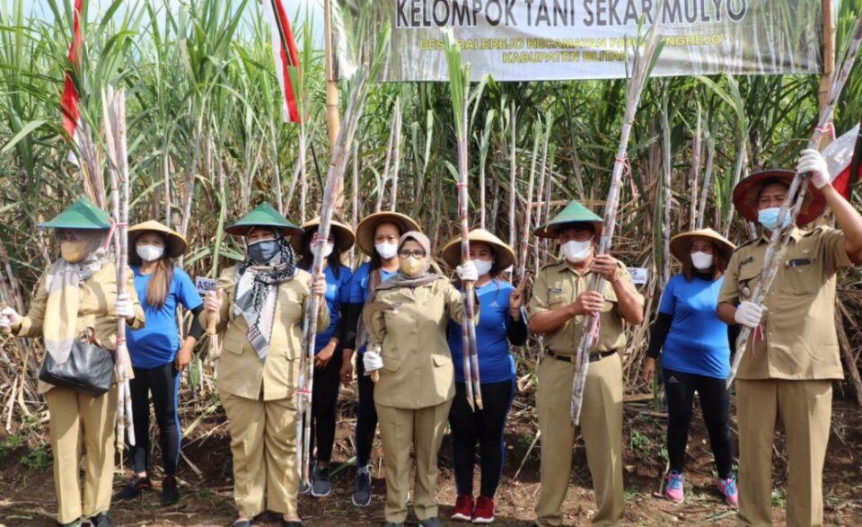 Bongkar Ratoon Langkah Kementan, Tingkatkan Produktivitas Petani Tebu di Kabupaten Blitar
